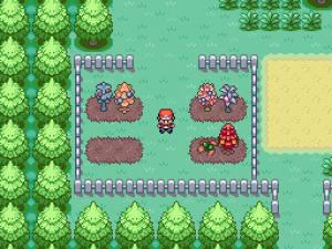 arbres à baies dans pokémon émeraude saphir rubis